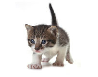 Baby Cute Kitten on a White Background Stock Photos