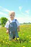 Baby in Dandelion Field Royalty Free Stock Photography