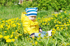 Baby among dandelions Stock Photo