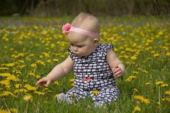 Baby in Dandelions royalty free stock photos