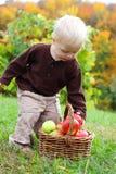Baby, das Apple vom Korb im Herbst ergreift Lizenzfreie Stockfotografie