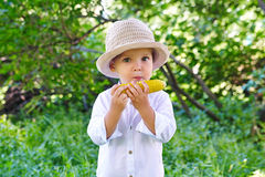 Baby, das gekochten Mais isst Lizenzfreie Stockfotos
