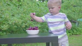 Baby, das Kirschen im Garten isst Kirschen in einer Platte auf einer Tabelle stock video