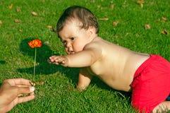 Baby, das mit einer Blume spielt stockbilder