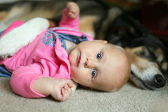 Baby, das mit Haustier-Schäferhund Dog sich anschmiegt Stockbilder