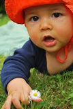 Flower Picking Baby. Multiracial baby with big brown eyes looking at a camera with mouth open orange sunhat picking a daisy flower from grass on a sunny summer Stock Photo