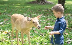 Baby with deer. In the contact Zoo Royalty Free Stock Images