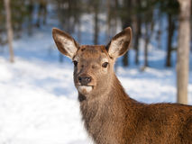 Baby deer fawn Stock Photos