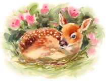 Baby Deer surrounded by flowers Watercolor Fawn Animal Illustration Hand Painted Royalty Free Stock Image