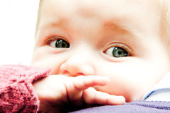 Baby dentition Stock Photography