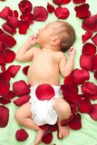 Baby die in bloembloemblaadjes legt Stock Foto's