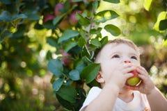 Baby die een appel eten Stock Foto's
