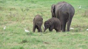 Baby die elephnats in de wildernis spelen stock foto