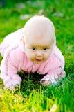 Baby die op gras kruipt Royalty-vrije Stock Foto