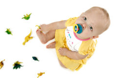 Baby with Dinosaurs. 14 month old baby girl playing with dinosaurs on white background royalty free stock photography