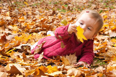 Baby discovering autumn leaves Stock Photo