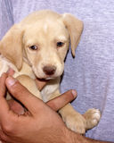 Baby dog stock image