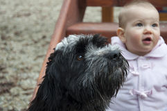 Baby and dog Royalty Free Stock Photography