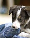 Baby dog. Little homeless puppie  pending adoption Stock Photos