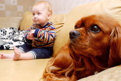 Baby and dog. Baby sitting with a King Charles Spaniel on a sofa Stock Photos