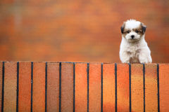 Baby dog Royalty Free Stock Photos