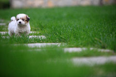 Baby dog. A baby dog lost parents stock images