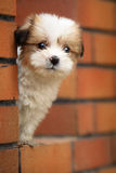 Baby dog. A baby dog lost parents Stock Photography