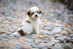 Baby dog. In the garden royalty free stock photo