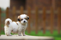 Baby dog. A baby dog in the garden royalty free stock image