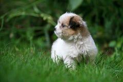 Baby dog Royalty Free Stock Photo