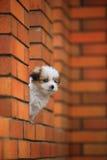 Baby dog Royalty Free Stock Photos