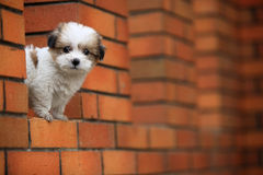 Baby dog Royalty Free Stock Photography