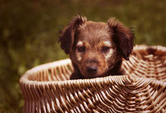 Baby dog Stock Images