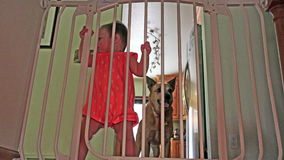 Baby and dog behind safety bars on the stairs. stock video footage