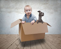 Baby and dog in a box Stock Photos