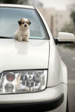 Baby dog and car Stock Photography