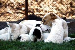 Baby dog family Royalty Free Stock Photos