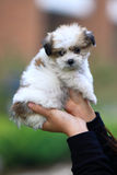 Baby dog in the hands stock images