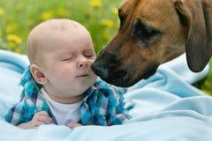 Baby and Dog. Little boy kissing big dog Royalty Free Stock Image