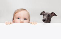 Baby and dog Stock Images