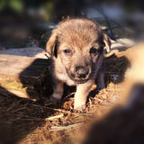 Baby dog. Looking for mum, cute, young royalty free stock images
