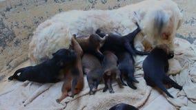 Baby dog newborn. Close up baby dog newborn stock video