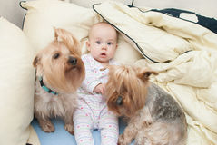 Baby with dogs Royalty Free Stock Photos