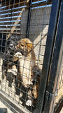 Baby dogs in a shelter Royalty Free Stock Image