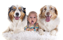Baby and dogs Royalty Free Stock Photo