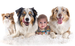 Baby and dogs stock photography