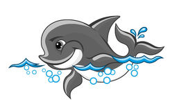 Baby dolphin. Beautiful baby dolphin in water for nature or children book design Stock Images