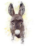 Baby donkey mule watercolor Stock Photo