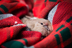 Baby Dove Rescue stock images
