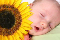 Baby in dreamland. Young baby in dreamland Royalty Free Stock Photography